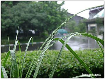 rain_leaves2.jpg