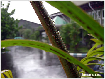 rain_leaves3.jpg